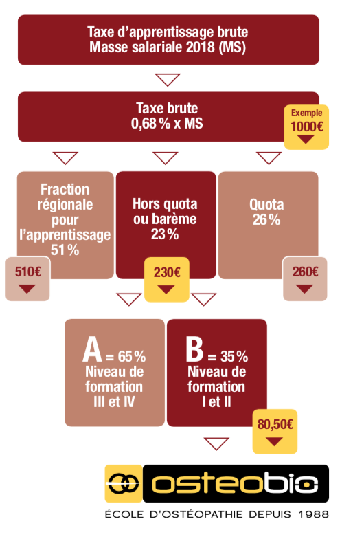 Schéma sur la taxe d'apprentissage de l'école d'ostéopathie Ostéobio Paris